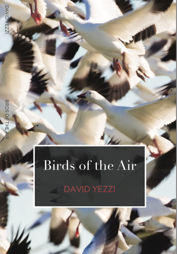 Birds of Air